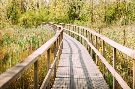 Wooden pier in countryside over low marsh going toward woods in the outdoor, expressing feeling of serenity and future path Stock Photo