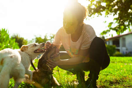 young woman playing and combing through her dogs outdoors at sunset with beautiful warm sunset light, dogs are happy and joyful Foto de archivo