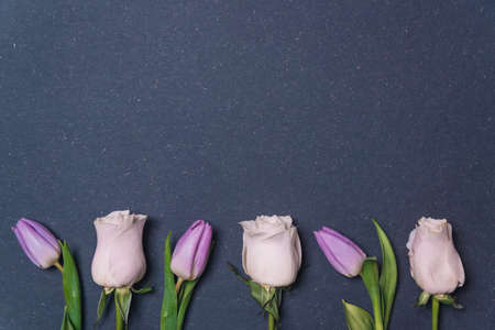 lilac tulips and pink rose row on dark black background closeup top view. spring season concept. minimal composition. row of colorful tulips flowers flat lay with copy space