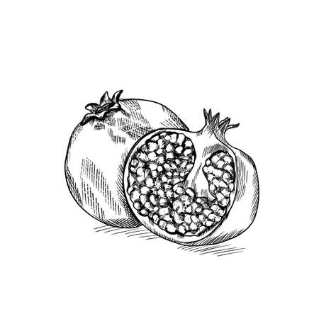 Pomegranate engraved style illustration. Hand drawn Illusztráció