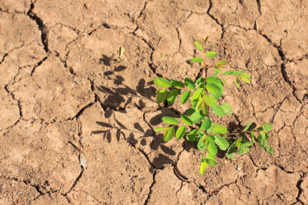 environmental issue: Dry soil with a little tree growing with shadow
