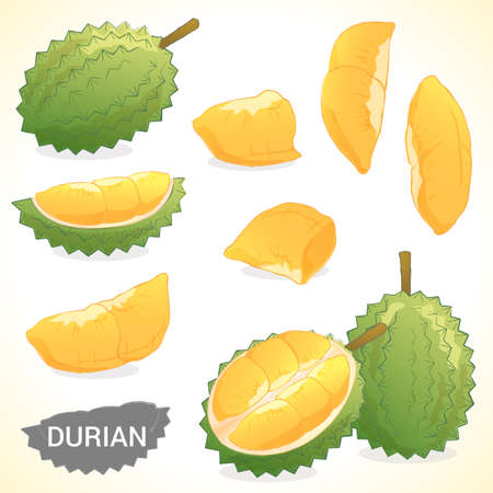 Set of tropical durian in vector and various style Çizim