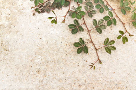 creeping plant: Green creeping plant on concrete background