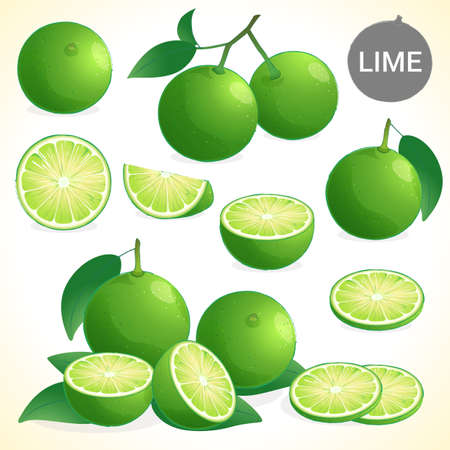 lime: Set of green lime with leaf in various styles vector format