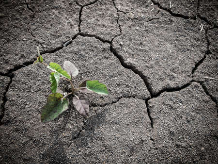 infertile: Growing little tree on dry crack and infertile soil