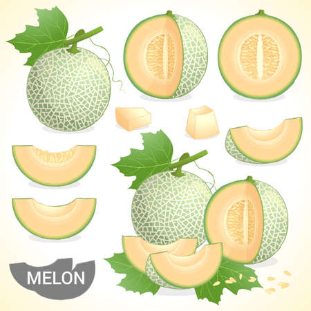 Set of cantaloupe melon fruit in various styles vector format Vettoriali