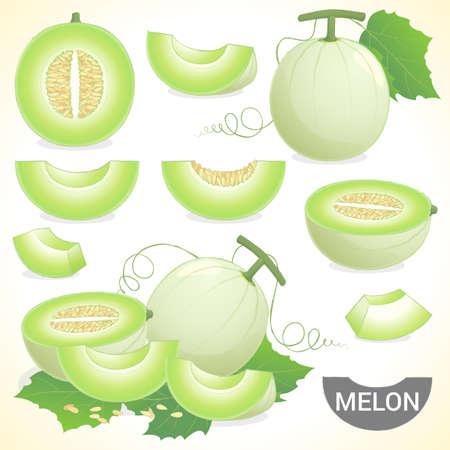 Conjunto de fruta melón rocío de miel Honeymelon en varios estilos formato vectorial Foto de archivo - 47180832