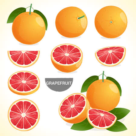 Set of grapefruit with leaf in various styles