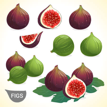 Set of dark fig and green figs in various styles vector format Çizim