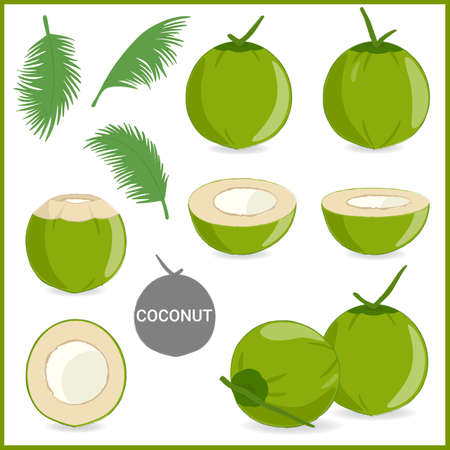 Set of fresh young coconut in vector format and various style 일러스트