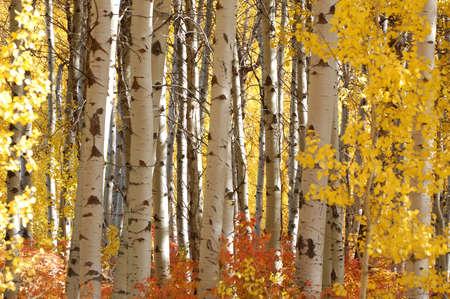 Bunte Blätter im Cascade Schleife in Washington State im Oktober  Standard-Bild - 2257316