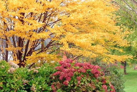 Fall leaves in it's peak season in pacific Northwest Stock Photo - 2257375