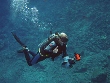 Duiker in het diepe water Stockfoto