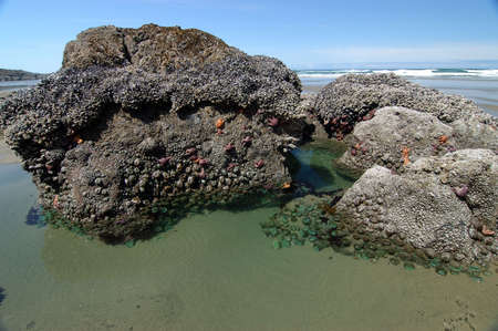 rock formation: Tide Pool