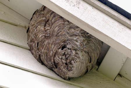 abejas panal: Enorme Bee urticaria Bajo el tejado de una casa de residencia