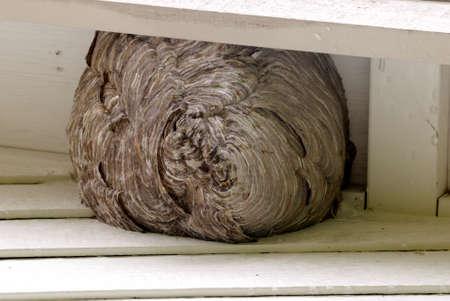Close up of a bee hives Reklamní fotografie