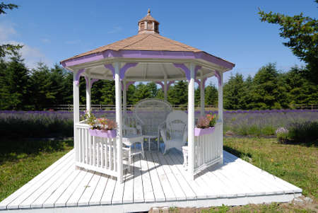 A Cabana in the middle of lavender field in Port Angeles, Washington photo