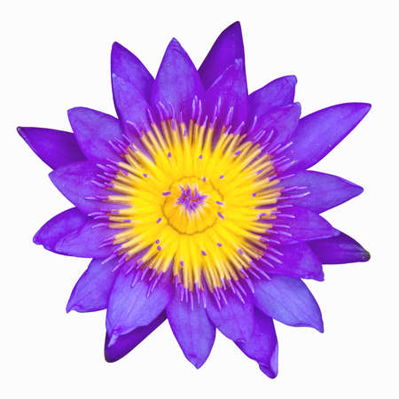 The purple lotus isolated on white background Stock Photo - 10413970