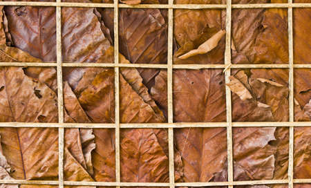 the leaf wall texture is natural wall for background Stock Photo - 10601467