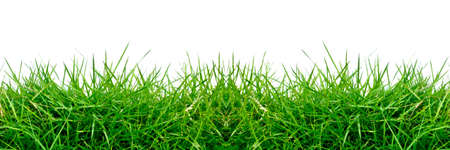 green grass isolated on white for background