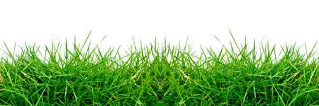 l'herbe verte isol�e sur fond blanc pour le fond