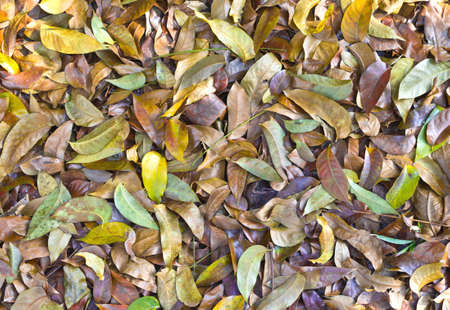 many dried leaves for background photo