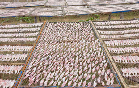 drying squid on the net, product from Thailand. Stock Photo - 13148380