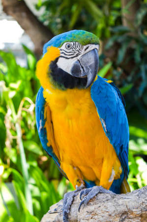 closed up of Macaw parrot in the garden