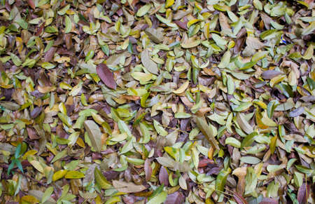 many dried leaves for background Stock Photo