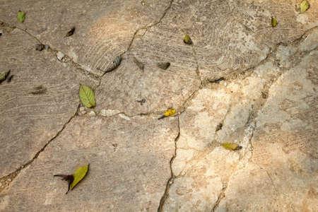 fissures sur le plancher de b�ton pour le fond
