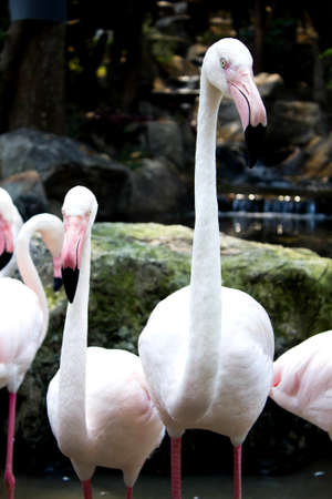 close up shot of flamingo bird in the zoo photo