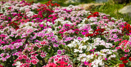 colorful of flowers in the park