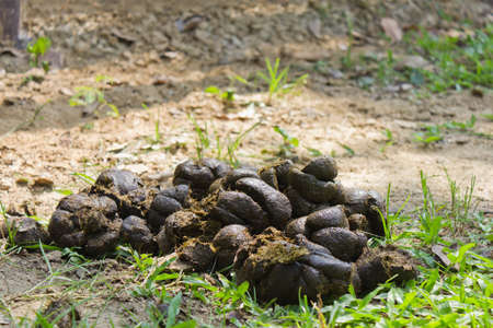 poo: Pile of horse dung on the ground