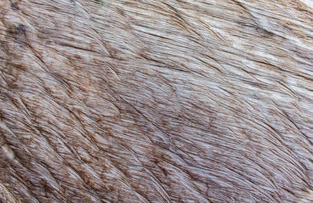 texture of the wood for background Stock Photo