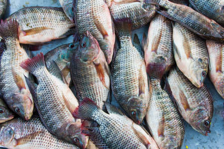 tilapia fishes in the fresh market, Thailand