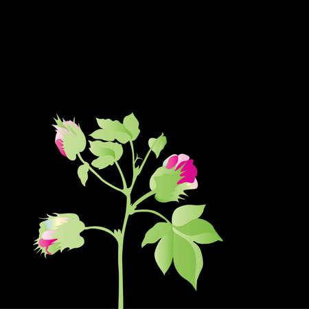 cotton plant: cotton plant blossoming Illustration