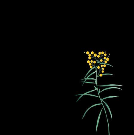 nightly: single plant is in a nightly garden