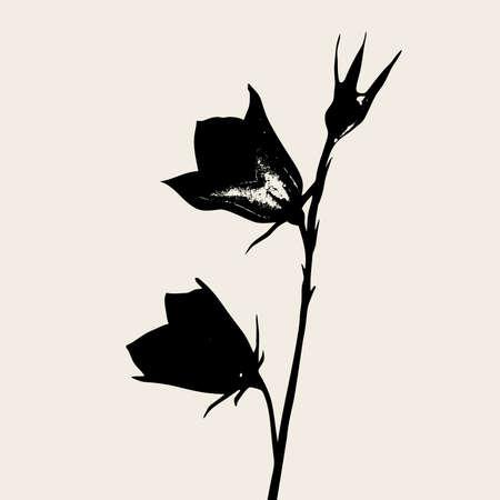 botanist: silhouette of flower