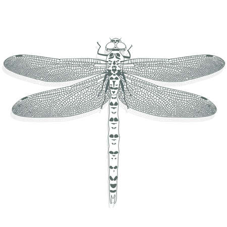 dragonfly wings: dragonfly on a white background Illustration