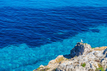egadi: Seagull resting on a rock against blue water on Favignana island in Sicily, Italy