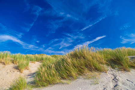 Dunes at De Haan, Belgian north sea coast against cirrus and stratus clouds and reed grass