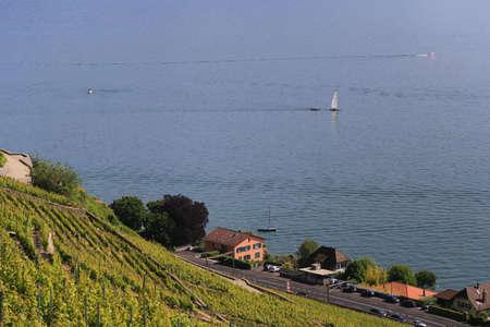 geneva: Lavaux vineyards on Lake Geneva, Switzerland