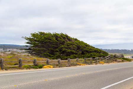 17: 17 mile drive landscape at pacific coast, Monterey, California