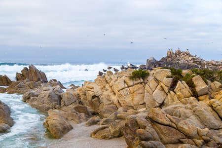 water birds: Bird Rock with water birds. seagulls and cormorants birds sitting on the rocks, Monterey, California Stock Photo