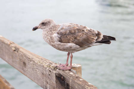 referred: Gulls, often referred to as seagulls, are seabirds of the family Laridae in the suborder Lari.