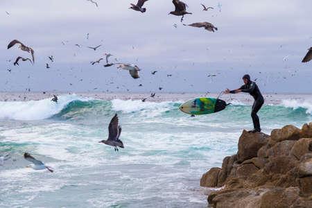 water birds: Surfer on rocks among numerous water birds. seagulls and cormorants birds sitting on the rocks, Monterey, California Stock Photo