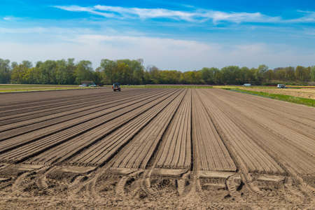 lisse: Tulip bulb field with bare soil and tractor after harvest near village of Lisse, the Netherlands