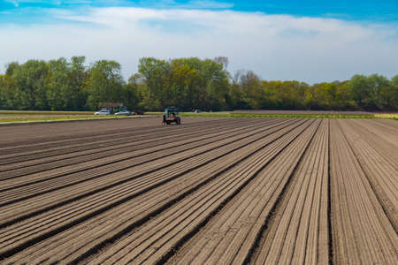 bulb tulip: Tulip bulb field with bare soil and tractor after harvest near village of Lisse, the Netherlands