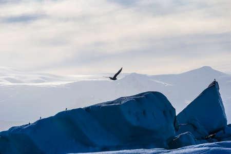 frozen lake: Seagulls above floating icebergs in Glacial Lagoon Jokullsarlon, South Iceland