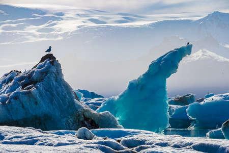 Zeemeeuwen boven drijvende ijsbergen in Glacial Lagoon Jokullsarlon, Zuid-IJsland